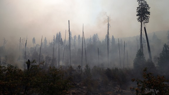 Trees burned by the Rim Fire stand charred on August 25 in Yosemite National Park.