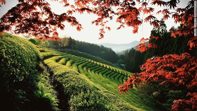 https://cdn.cnn.com/cnnnext/dam/assets/130826153635-amazing-sights---boseong-tea-fields-story-top.jpg