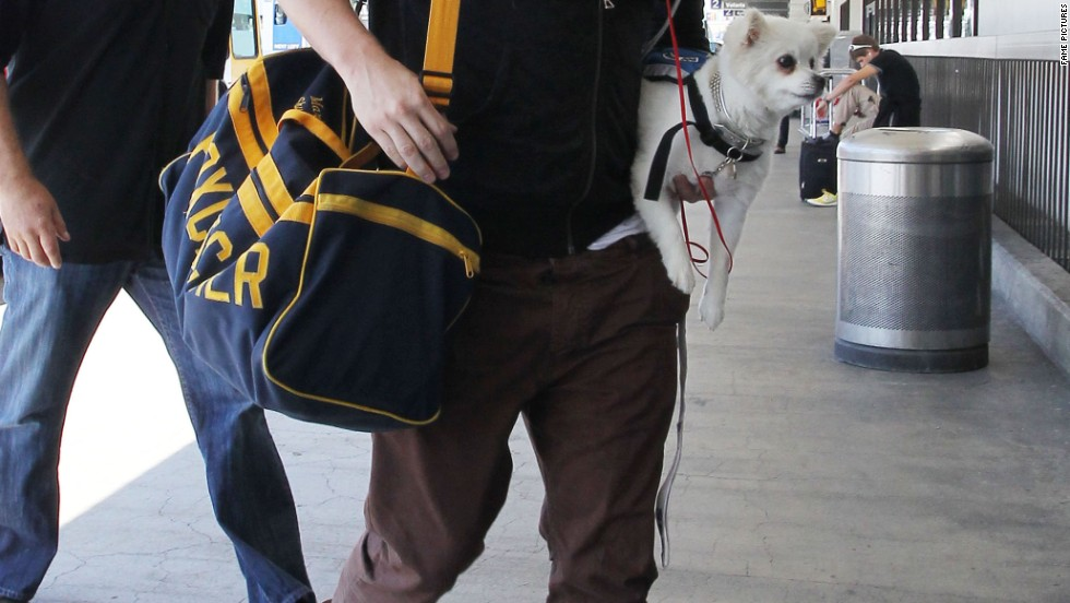 Channing Tatum travels with his pooch on August 24.