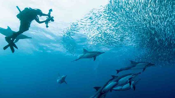 """Dubbed """"the greatest shoal on earth,"""" the sardine run on South Africa's Wild Coast holds two titles -- the world's largest animal migration also featuring the greatest gathering of predators on the planet."""