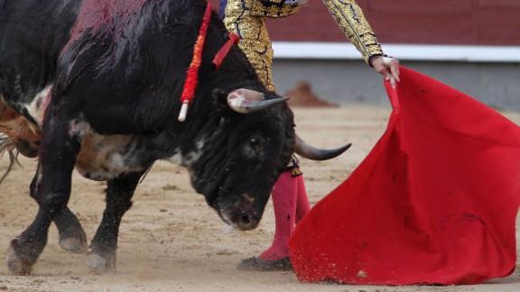 Spanish matador Morante de la Puebla makes a pass to a bull during a bullfighting at the Las Ventas bullring as part of the Arte y Cultura Feria on June 5, 2013 in Madrid. AFP PHOTO/ ALBERTO SIMON (Photo credit should read ALBERTO SIMON/AFP/Getty Images)