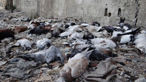 Pigeons' bodies litter the ground in the Damascus suburbs of Arbeen on Saturday, August 24.