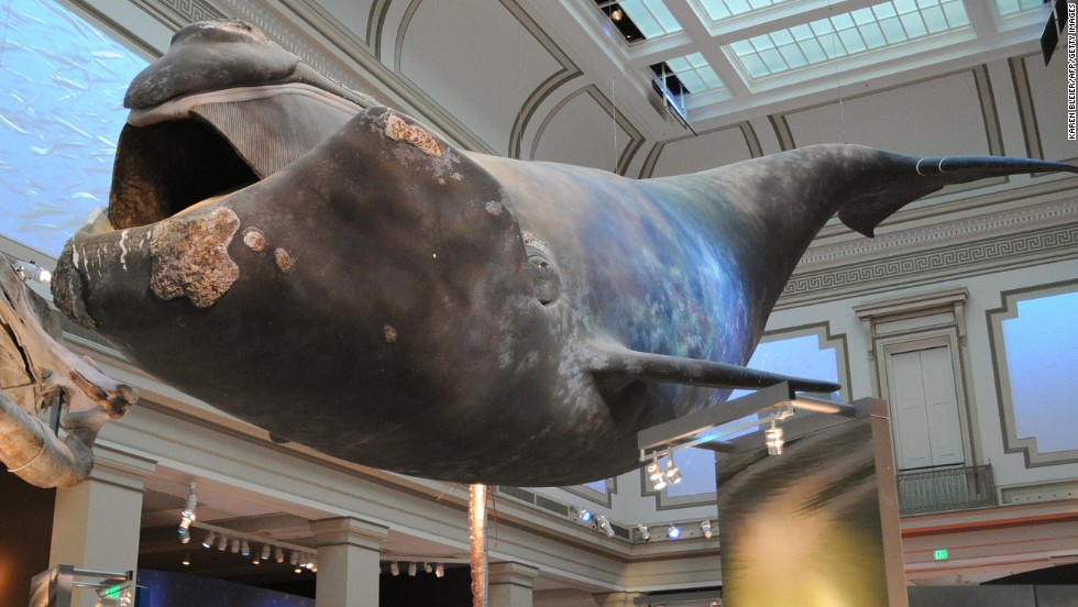 Museo Smithsonian.Discover The World S Most Visited Museums Cnn Travel