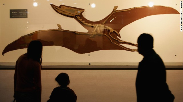 Visitors view a fossil specimen of a pterosaur at the Geological Museum of China in Beijing in April 2006.