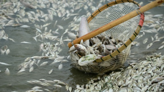 Dead fish are cleared from the Fuhe River in central China