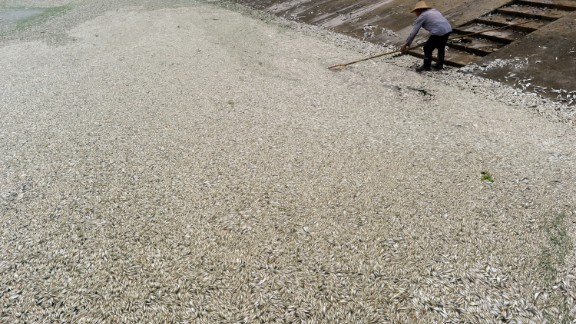 A resident clears dead fish from the river on September 3, the day after large numbers began to surface.