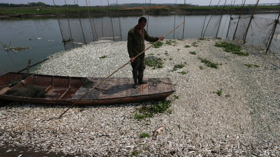 A fisherman makes his way through the fish-clogged river.