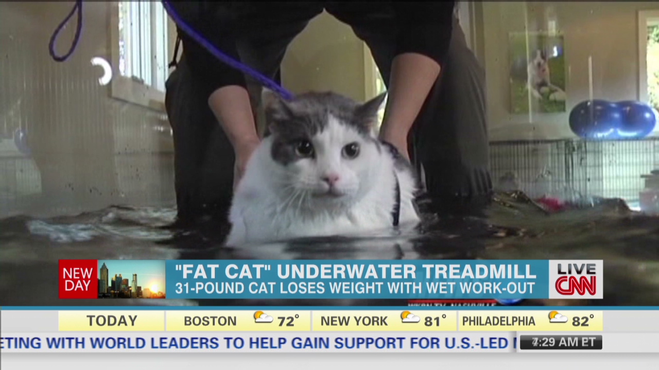 Fat cat\u0027 underwater treadmill workout , CNN Video
