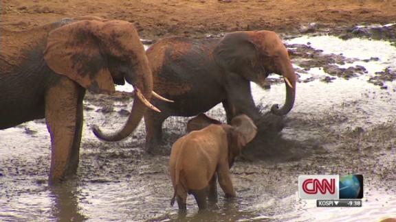 Saving Kenyan Elephants_00000101.jpg