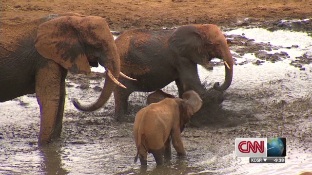Saving Kenyan Elephants_00000101.jpg