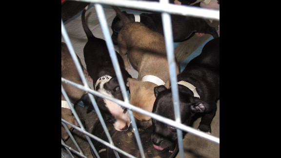 A special area has been set up for the pregnant dogs and those that are nursing their puppies.