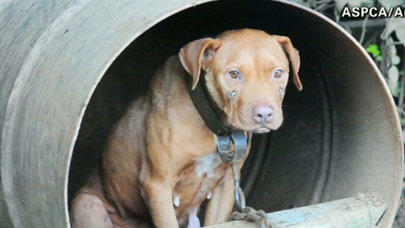 ac dnt Tuchman dogfighting victims rescued_00010203.jpg