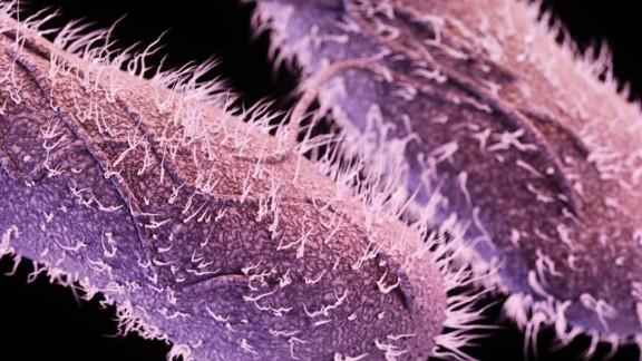 Drug-resistant non-typhoidal salmonella
