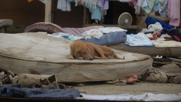 A muddy dog lies on a mattress amid the remains of a house destroyed by storms in Acapulco, Mexico, on September 19.