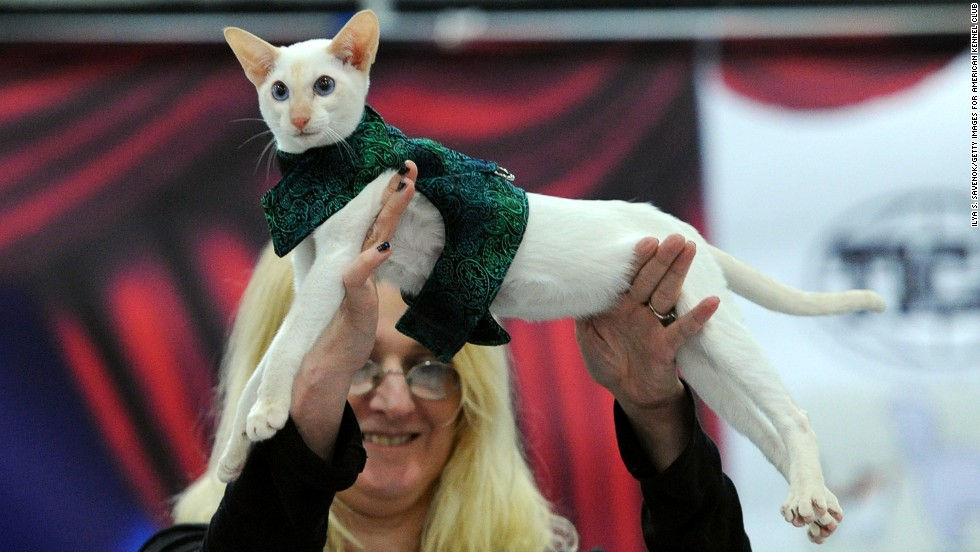 This sleek white cat is regal in a green patterned wrap.