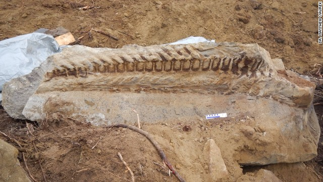 Worker uncovers dinosaur tail fossil