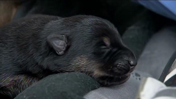 ca cop rescues pregnant dog _00011029.jpg