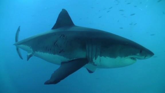 spc art of movement sharks a_00004810.jpg