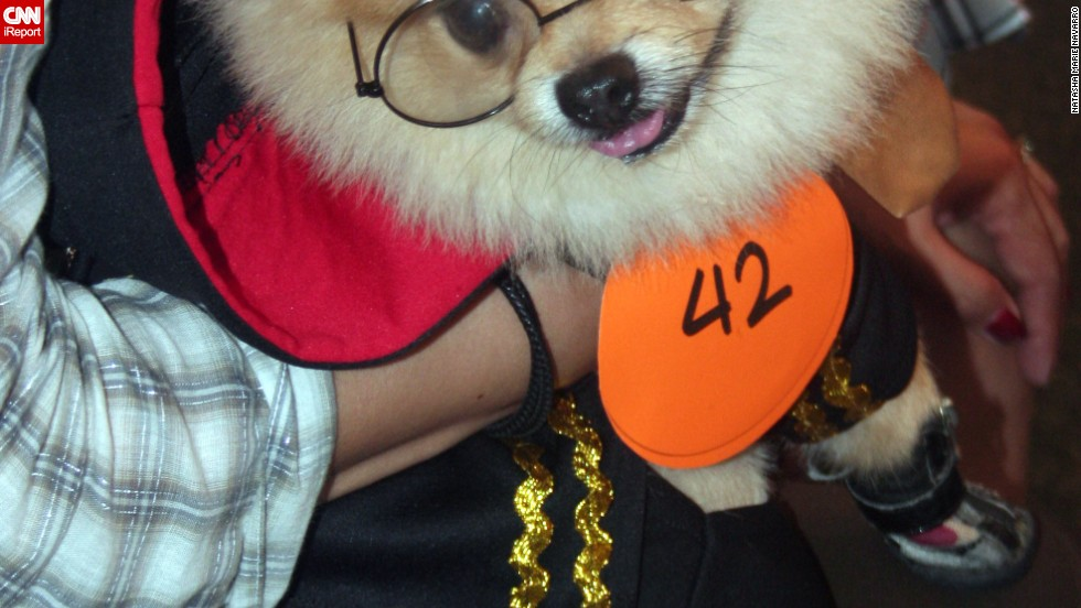 "This Pomeranian arrived at the Scaredy Cats and Dogs Walk in the Philippines as the boy wizard ""<a href=""http://ireport.cnn.com/docs/DOC-870763"">Hairy Potter</a>."""
