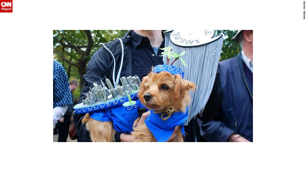 "Is your pup a force of nature? Cauvin spotted this dog <a href=""http://ireport.cnn.com/docs/DOC-693227"">dressed as Tropical Storm Irene</a> at the Tompkins Square Park Halloween Dog Parade in New York in 2011."