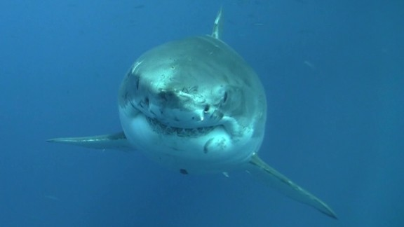 spc art of movement sharks b_00033929.jpg