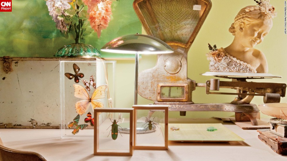 The Creels' display insect and butterfly specimens in clear frames among other curios.
