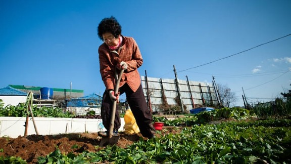 A farmer harvests produce from her small hillside plot in Busan, South Korea. More than half of South Korea