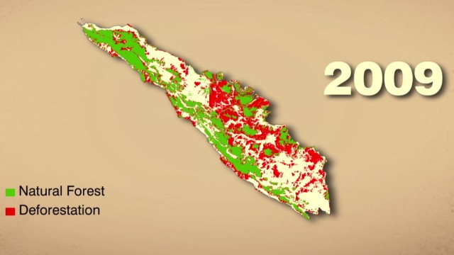 How Sumatra fights deforestation