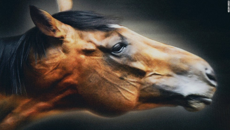 "Chris Levine's ""Frankel the Great,"" is a portrait of arguably the world's finest racehorse which will be officially unveiled at Ascot Racecourse this weekend. The stallion finished its career undefeated, winning all 14 of its races."