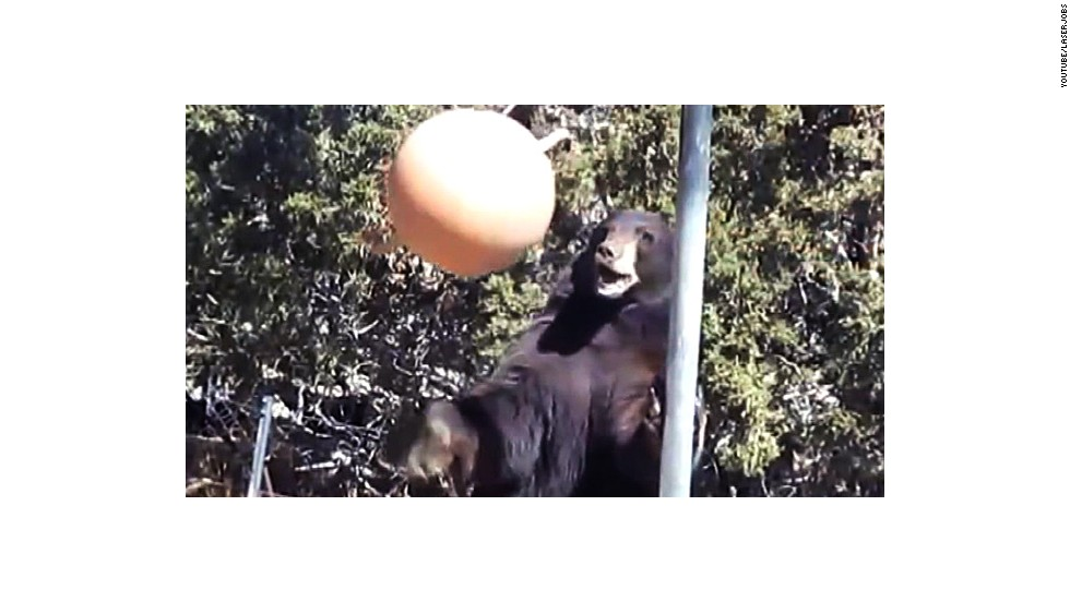 Watch a black bear play tetherball - CNN Video
