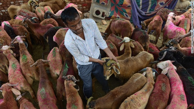 A  vendor handles a goat at a livestock market in Hyderabad, India. Many Muslims sacrifice an animal to celebrate the holiday.