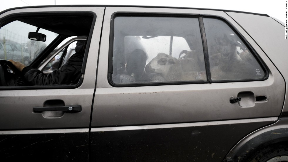 Sheep are left in a car at a livestock market near Pristina, Kosovo, on October 15.