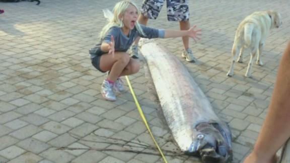 dnt oarfish find california_00001302.jpg