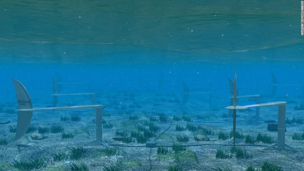 Shark 100 Meter Energy : New hammerhead shark species discovered cnn