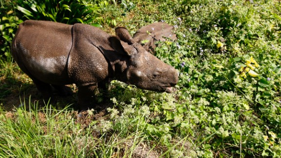 """Efforts to protect four of the world's last remaining northern white rhinos have been boosted by a $70,000 drone. The <a href=""""http://www.olpejetaconservancy.org/"""" target=""""_blank"""" target=""""_blank"""">Ol Pejeta Conservacy</a> in Kenya is planning to use the UAV to monitor the location of its wildlife and deter poachers from harming the animals."""