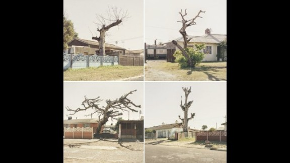 """This image by Dillon Marsh is from a series of photographs called """"Limbo,"""" which shows trees in the Cape Flats that have died, but not yet fallen. The Cape Flats is a poor area east of central Cape Town, home to a large percentage of the city"""