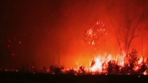 cnni australia fires ahron young_00022005.jpg