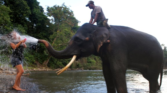 A Sumatran elephant splashes water on a tourist as elephants are bathed in Tangkahan river on Indonesia