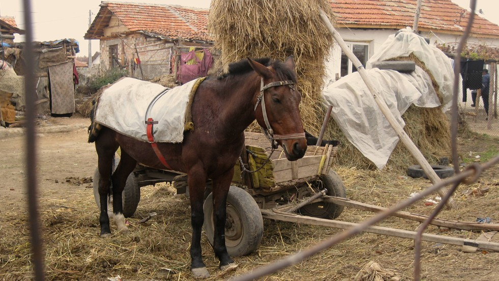 Living conditions in the Roma village of Nikolaevo, where Saska Ruseva and Atanas Rusev live, are rudimentary. Horse-drawn carts are still used for transportation of people and goods.