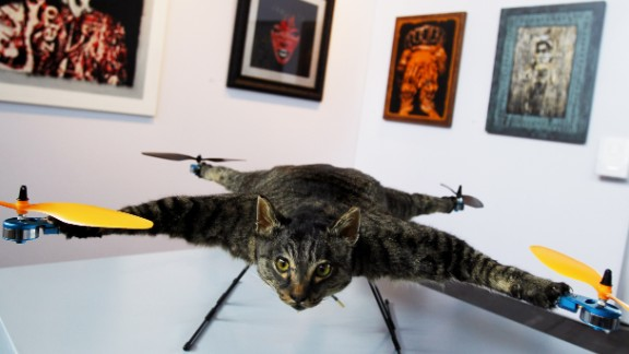 """Drone+stuffed cat = art. Orville is a flying helicopter cat made by Dutch artist <a href=""""http://bartjansen.tv/"""" target=""""_blank"""" target=""""_blank"""">Bert Jansen</a>. The remote-controlled quadcopter was first exhibited in Amsterdam and Jansen has since created more taxidermy drones."""