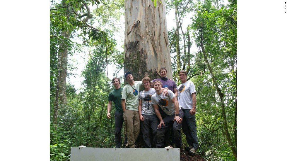 The group scaled climbed what was measured to be the world's tallest planted tree: an 81.5-meter eucalyptus in Limpopo.