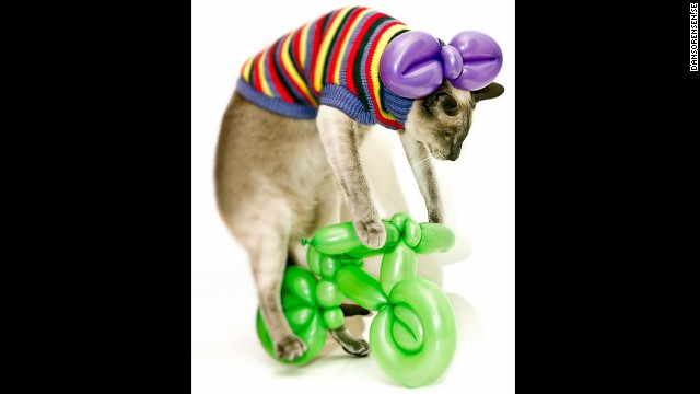 Gucci the cat rides a balloon bike made by Katja Wulff. You're welcome.