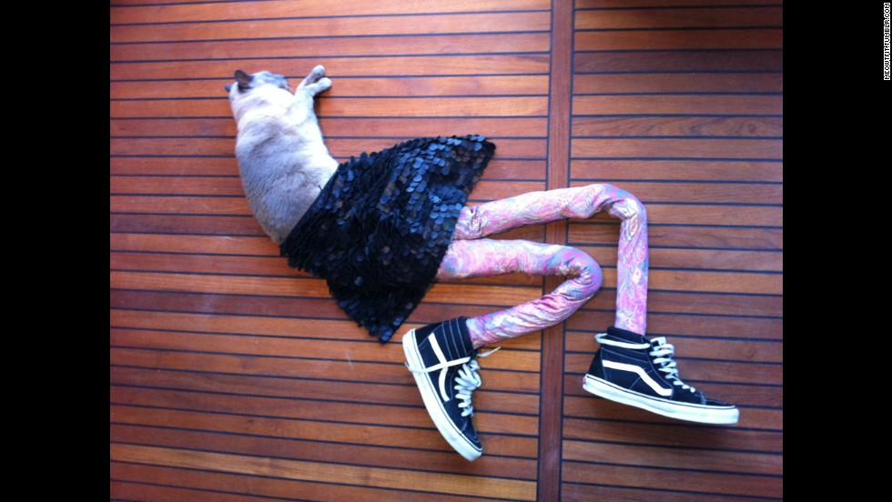 36e1c6df4d767 Apparently This Matters: Cats in clothes - CNN