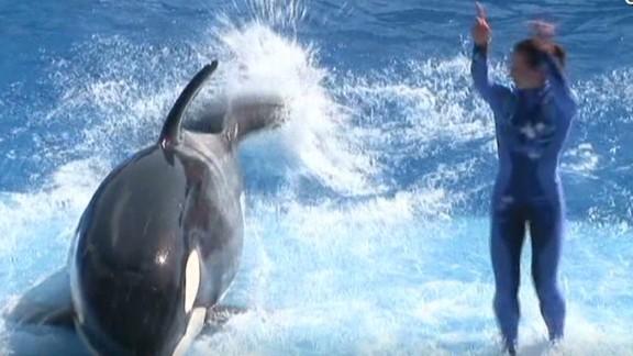 erin dnt savidge osha hearing affects seaworld_00001313.jpg