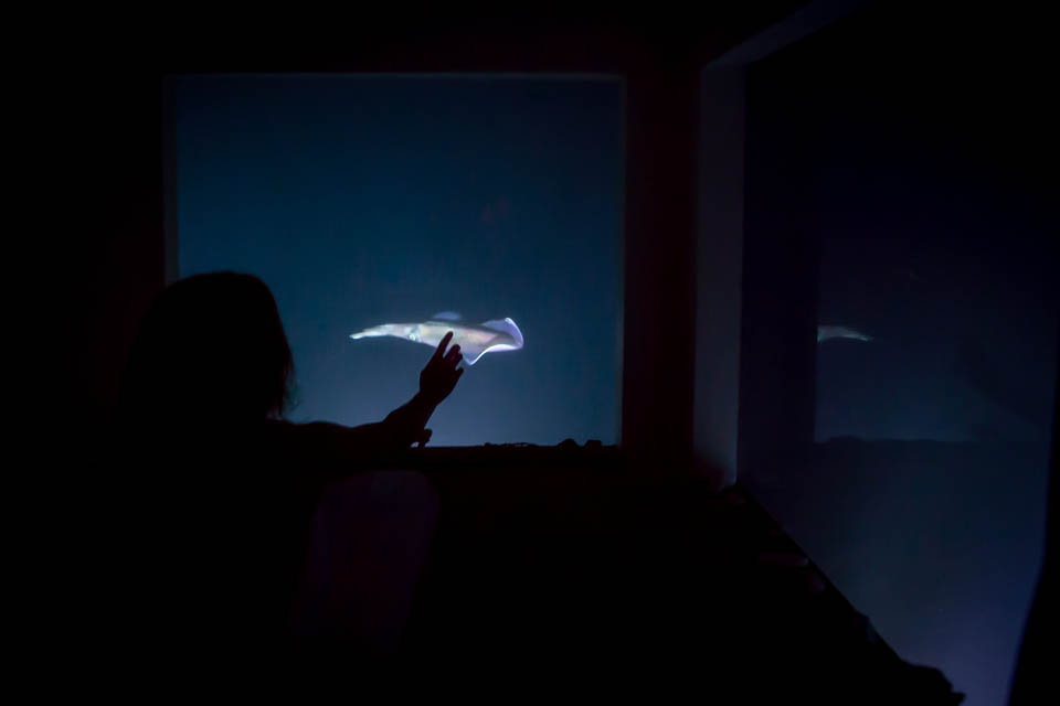 Underwater Hotel Room At Night To Sleeping With The Fish Underwater Hotel Room Opens Off Tanzania Coast Cnn Travel