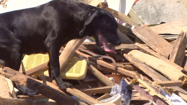 Cadaver dogs aid in typhoon recovery
