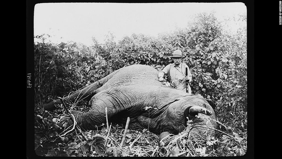 "Theodore Roosevelt, possibly the most famous sportsman to occupy the White House, continued to hunt after leaving office. In 1909, with the backing of the Smithsonian Institution, Roosevelt went on <a href=""http://www.theodoreroosevelt.org/site/c.elKSIdOWIiJ8H/b.8344379/k.2B69/The_HUNTER.htm"" target=""_blank"">a yearlong safari</a> that killed or trapped more than 11,000 animals."