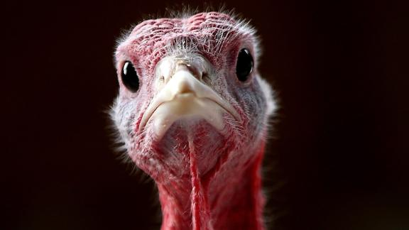 View Thanksgiving facts and turkey trivia