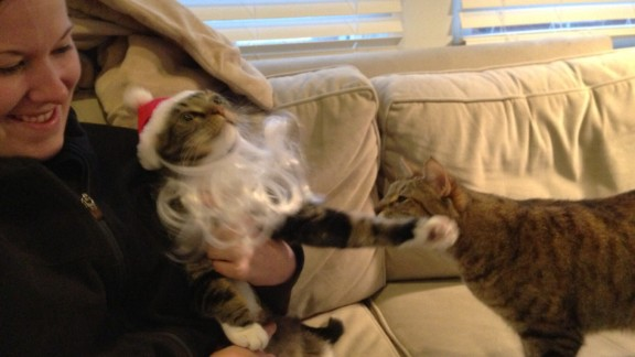 Kristy Blanchfield attempts to pose her cat Ron, as her other cat, Shiva, looks on with concern.
