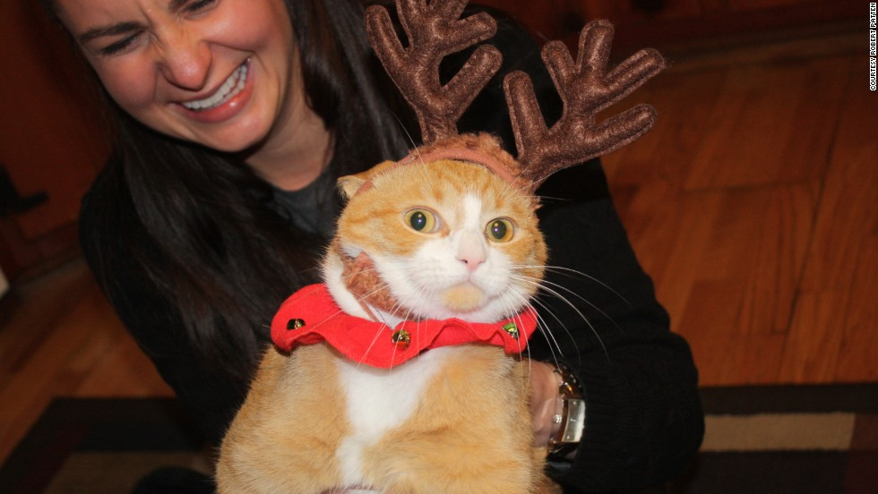 Kristen Patten helps Col. Mustard the cat pose for a holiday card photo. Col. Mustard is not laughing.